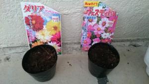 沖縄中央店、花咲きます!(笑)